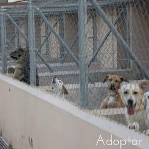 adopt,-6
