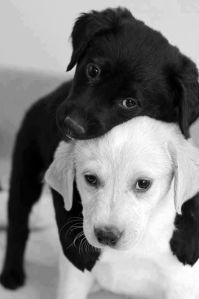 perro-blanco-y-negro