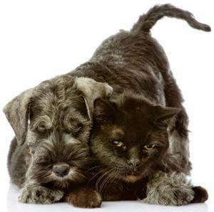 perro-negro-y-gato-negro