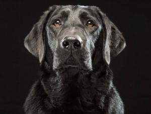 Sindrome del perro negro
