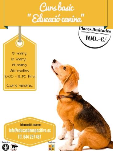 curso-basicoeducacion-canina