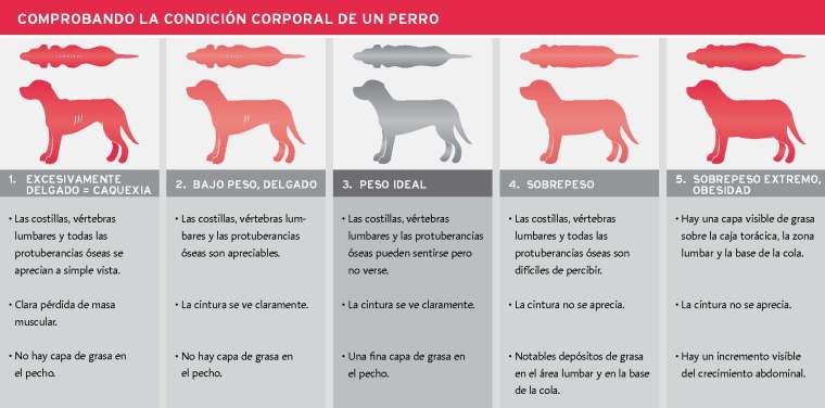 54-tabla-condicion-corporal-de-un-perro