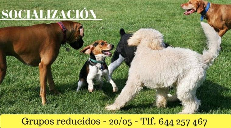 Socializació-3.jpg