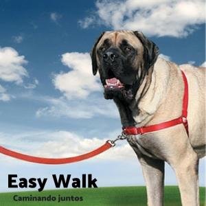 Easy Walk-2