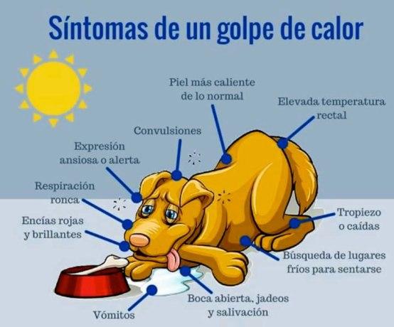 golpe-calor-perro-sintomas
