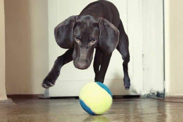 juegos-para-perros