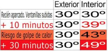 temperatura coche perro